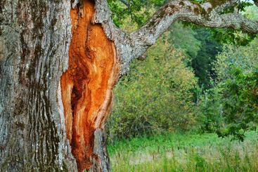 tree-services4