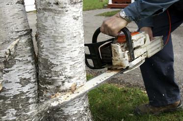 trees-service1